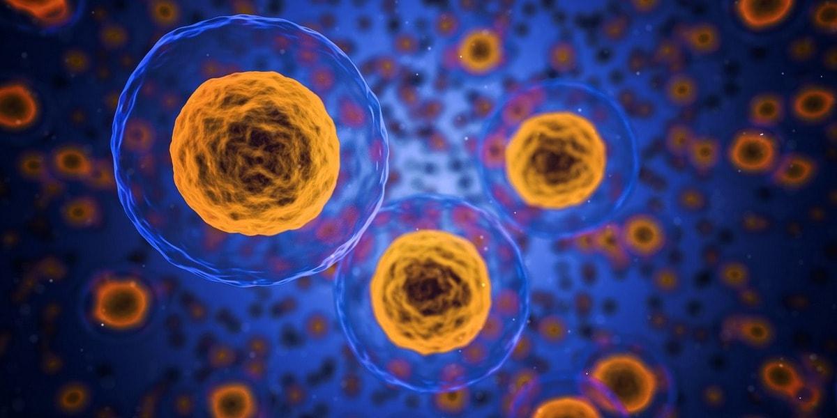 компьютерная 3d визуализация клеток организма
