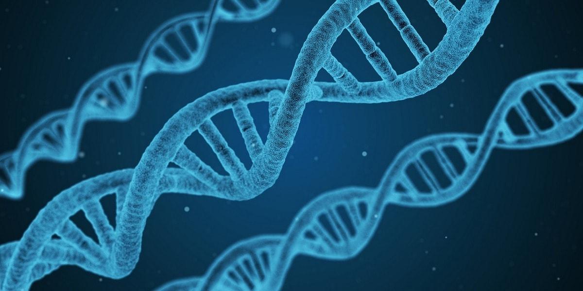 сколько стоит 3d визуализация ДНК