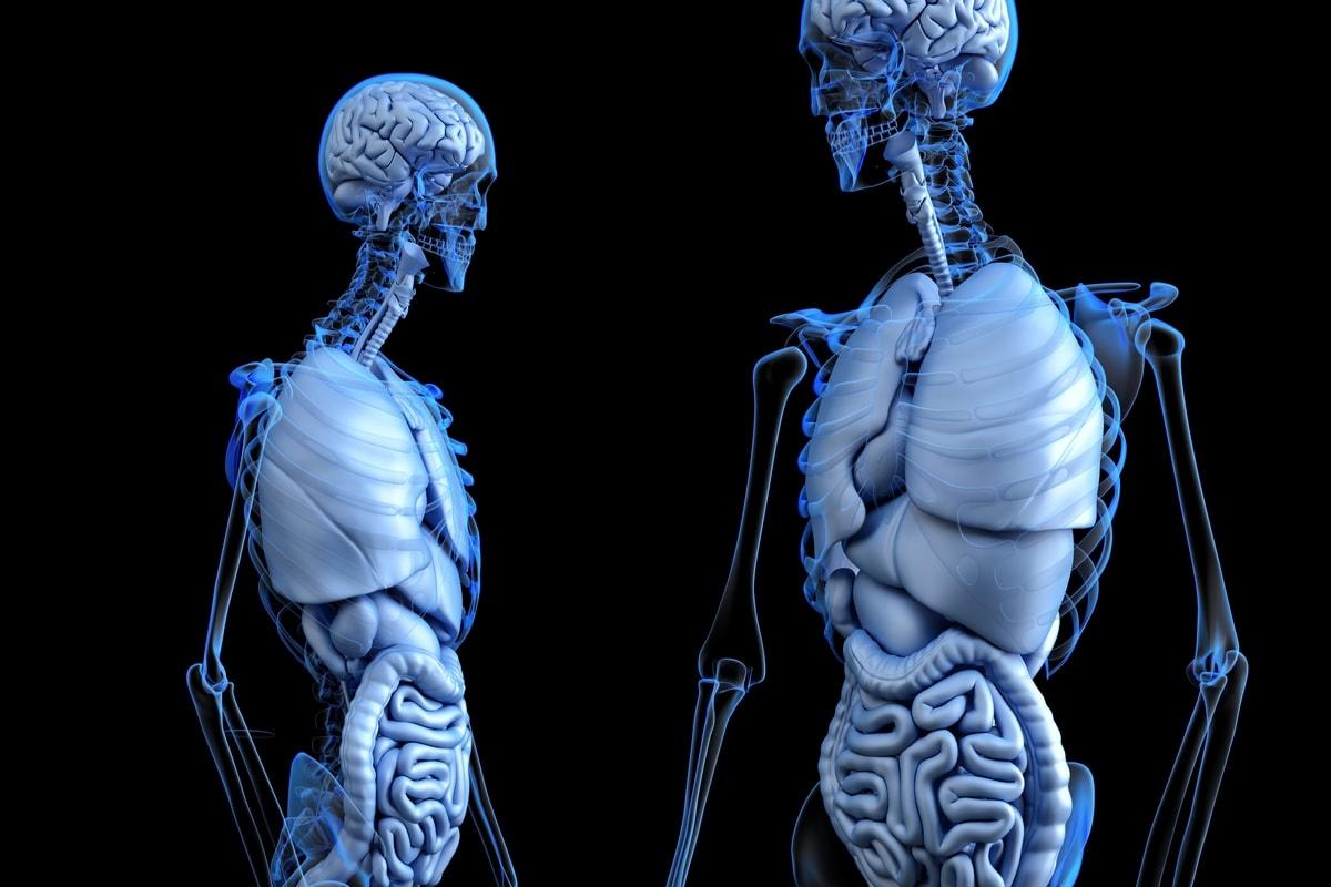 3d моделирование и визуализация внутренних органов